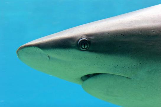 sixty sharks