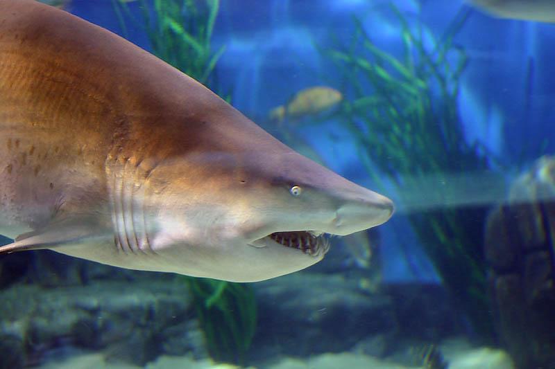 List of Sharks | Sixty Sharks